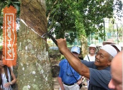 ANRPC прогнозирует на 2015 год рост производства натурального каучука